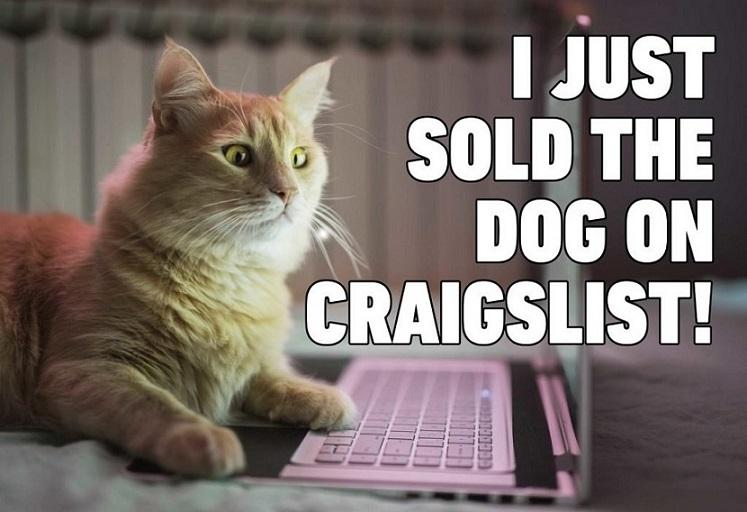 Cat-Sold-Dog